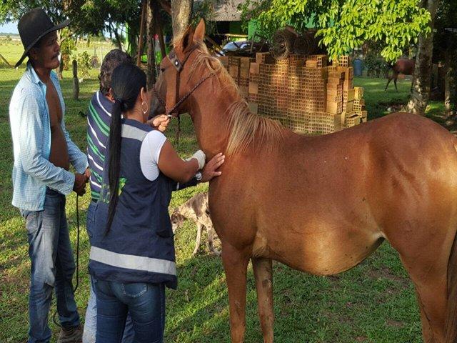 caballos-ica
