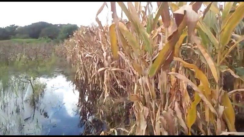 cultivos-inundados
