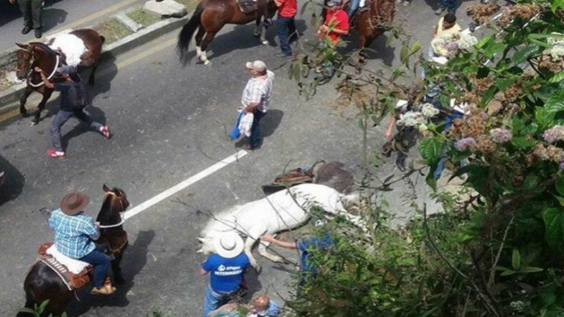 caballo_manizales
