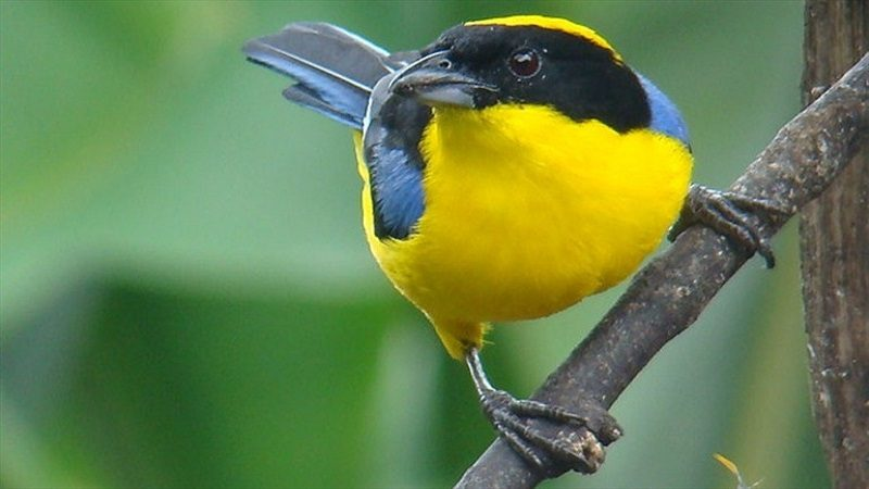 Colombia, número uno en avistamiento de aves en el Global Big Day