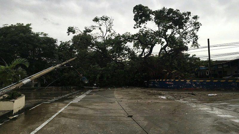 Árboles caídos, casas inundadas y varios barrios sin luz, tras el fuerte aguacero