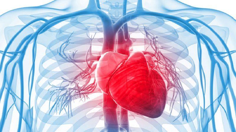 para tener un sistema cardiovascular sano en su vejez