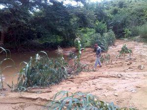 cultivo de yuca afectado por invierno