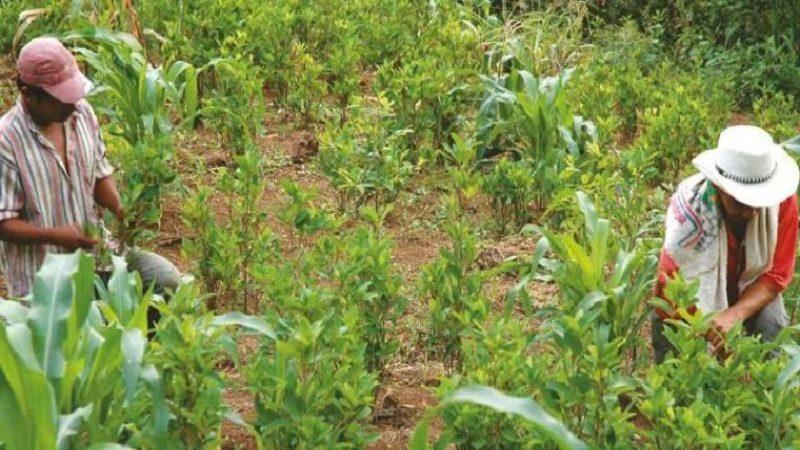 Córdoba avanza en la suscripción de acuerdos para sustitución de cultivos ilícitos