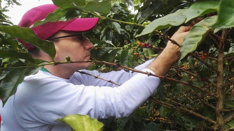 Mejoran calidad del café colombiano, considerado el más suave del mundo