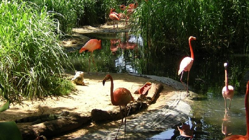 Zoológico de Barranquilla tiene programación especial en semana de receso escolar 1