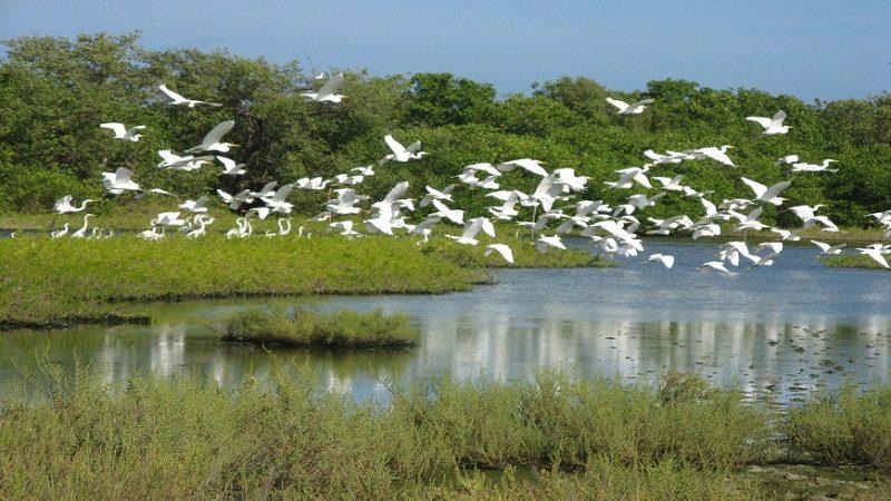 Colombia alcanza un millón de hectáreas protegidas de humedales