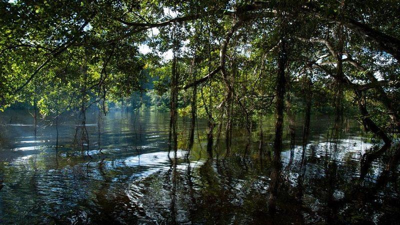 La NASA apoyará con tecnología espacial monitoreo de biodiversidad colombiana