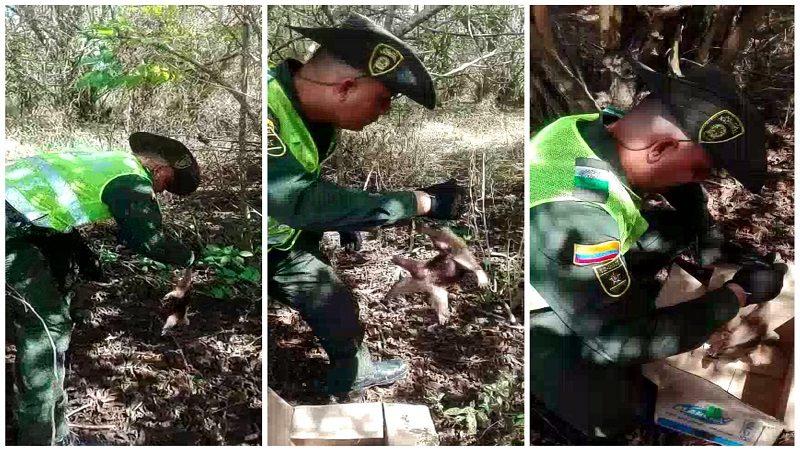 Rescatan oso hormiguero que era atacado con piedras en Palmar de Varela