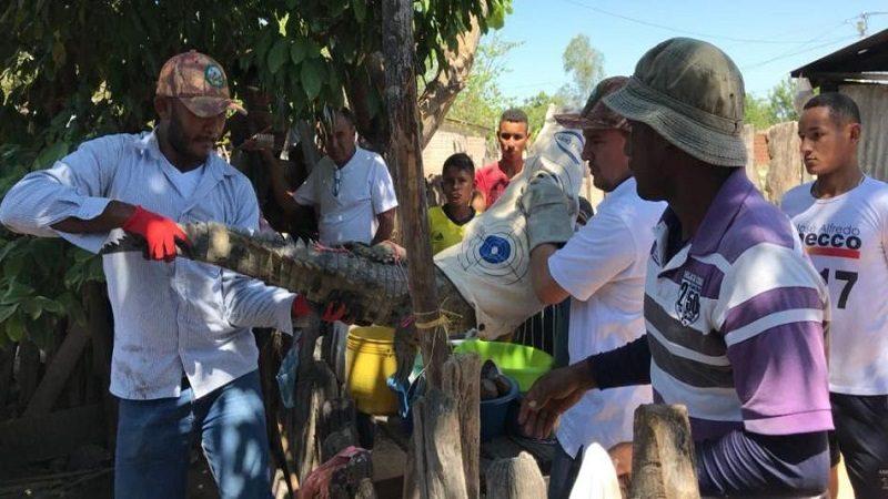 Familia entregó un caimán aguja que tenía como mascota en El Paso, Cesar