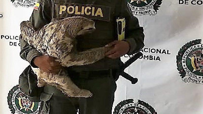 Rescatan oso perezoso que era atacado a piedras en Atlántico ok