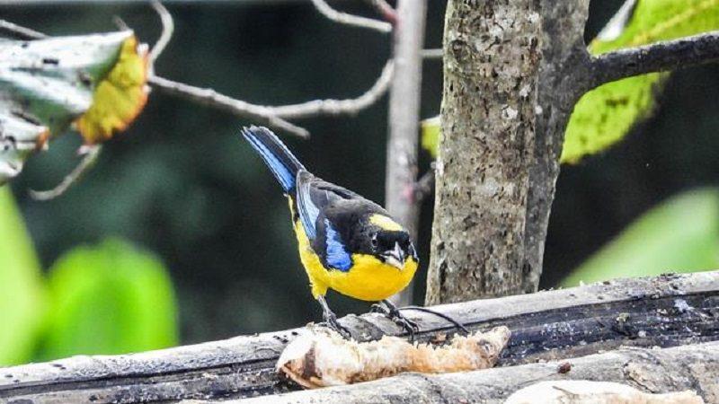 Cada año se descubre una nueva especie de ave en Colombia