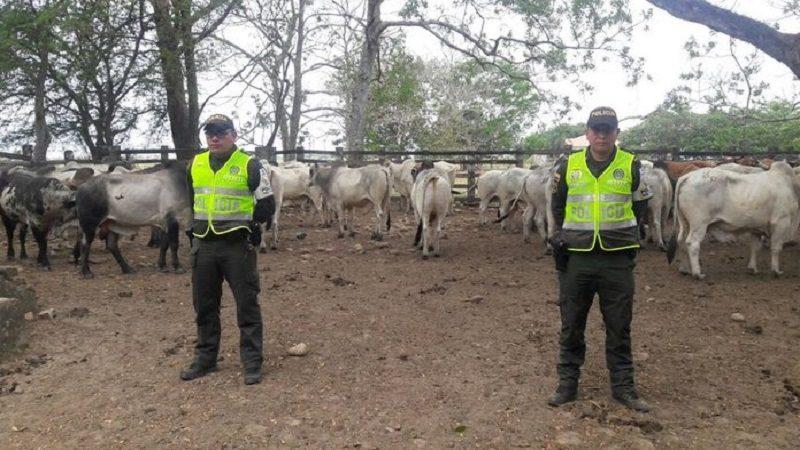 Colombia cuenta con una nueva estrategia para frenar el contrabando de ganado y carne, identificada con la sigla CIIIP