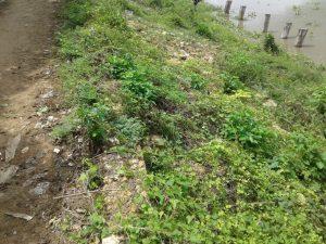 Comunidad de Santa Lucía reporta que el Canal del Dique ya está socavando el terraplén 2