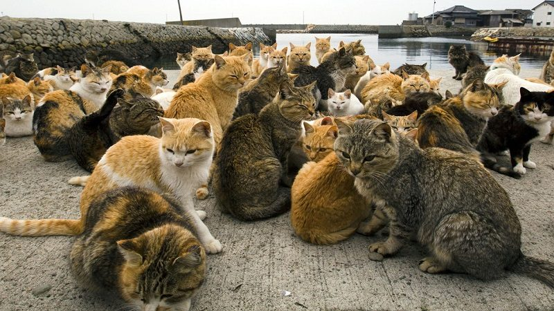 Arrestan a un hombre en China que tenía 500 gatos para vender a restaurantes