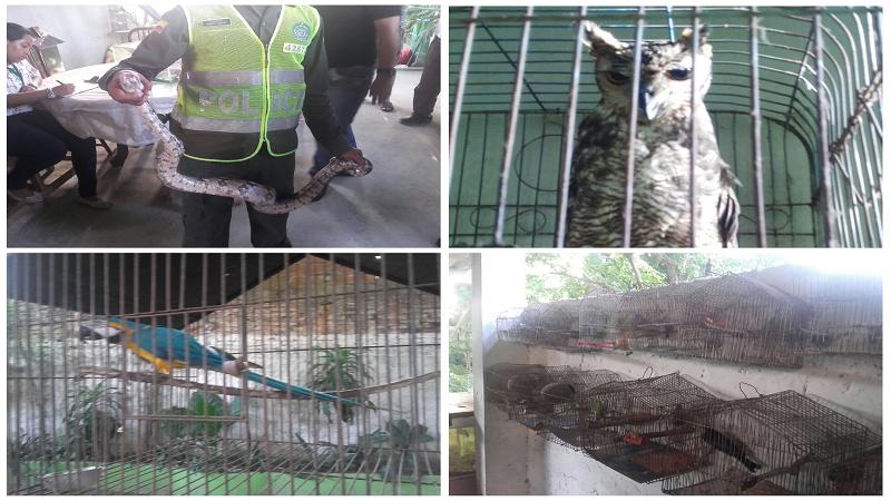 Encuentran una casa-zoológico con más de 90 animales en el barrio Lucero