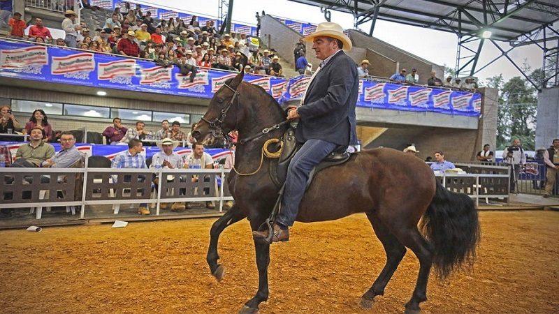 Reconocen el caballo de Paso Fino Colombiano como raza autóctona