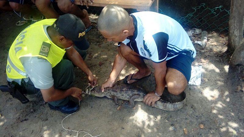 Babilla de un metro de largo causa pánico en centro recreacional de Tubará