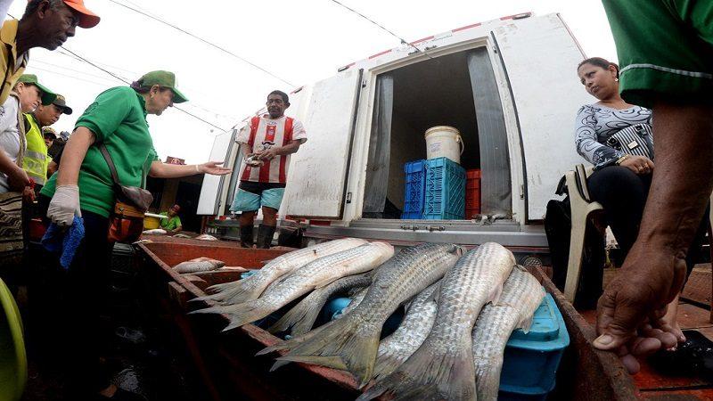 Después de 4 años, regresa la abundancia de bocachico a Barranquilla