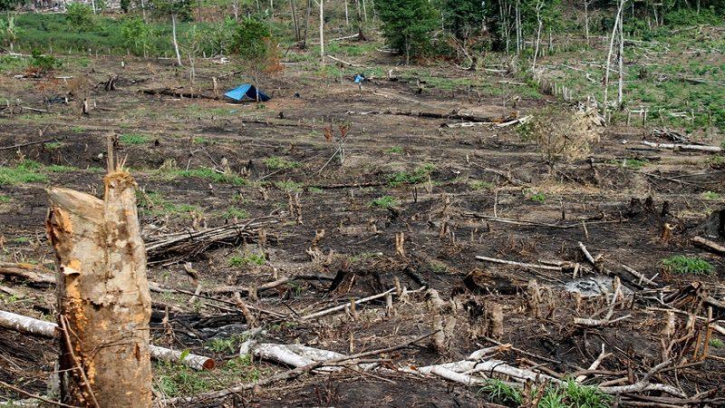 Gobierno Nacional refuerza medidas para contrarrestar la deforestación