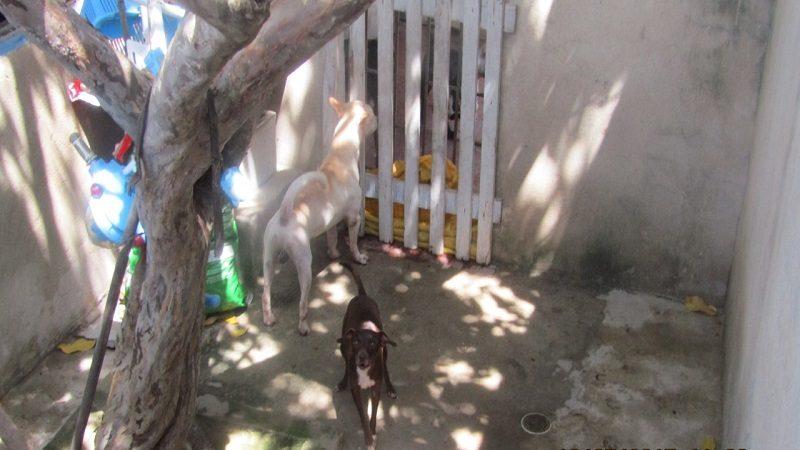 Vecinos del barrio Siete de Abril denuncian a vecina que vive con 42 perros