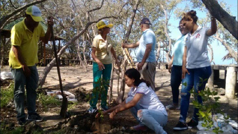 Con 260 mangles inicia reforestación en playas de Puerto Colombia