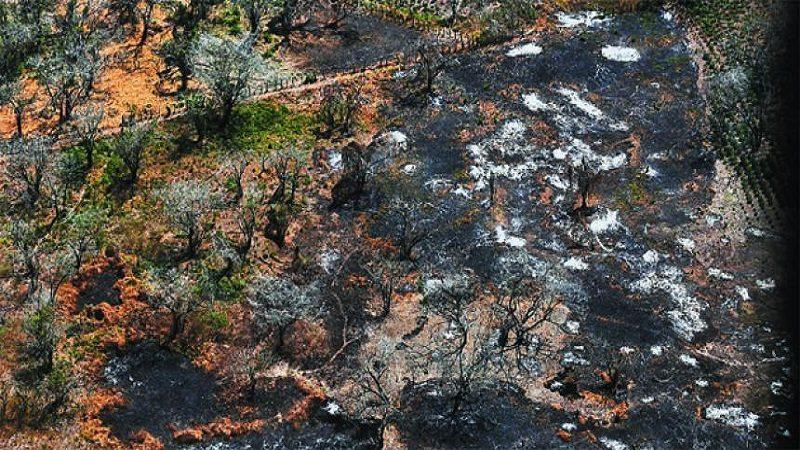 Incendio consume decenas de hectáreas de bosque en Campo de la Cruz