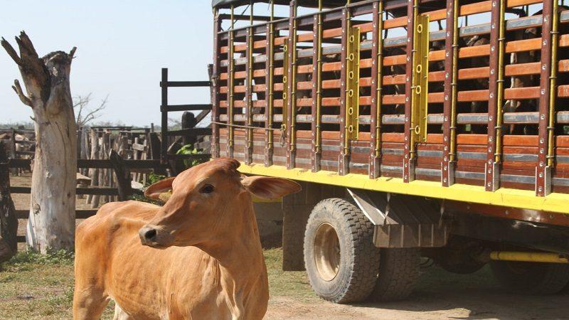 Refuerzan medidas sanitarias a expendios de carnes en Atlántico