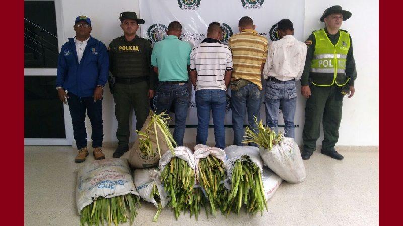 Incautan 1.500 palmas de cera que traían del Magdalena para vender en Atlántico