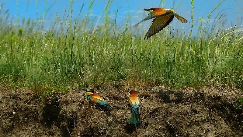 Colombia tiene el récord mundial en avistamiento de aves