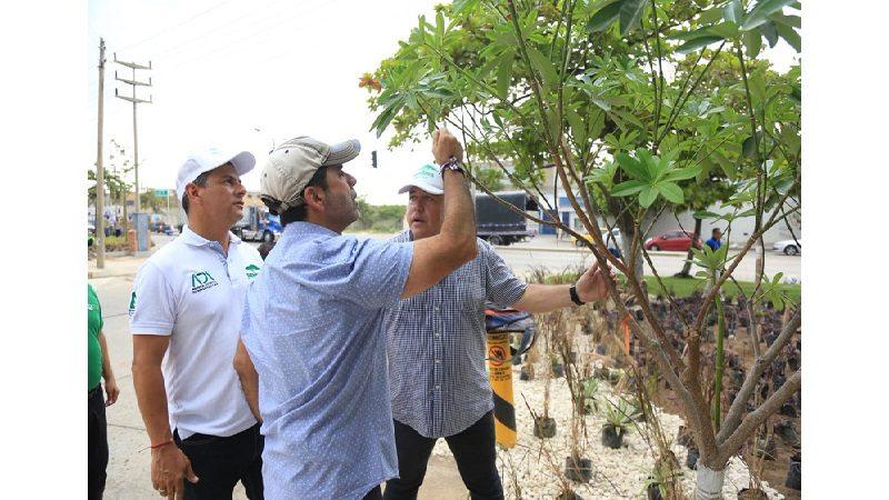 Barranquilla es otra ciudad con el programa Siembra Barranquilla