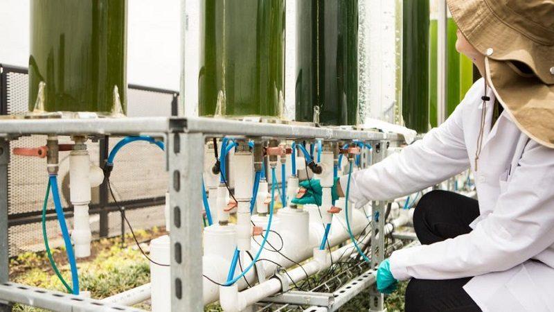 Cementos Argos hará prueba de validación industrial en Cartagena para capturar CO2 con microalgas