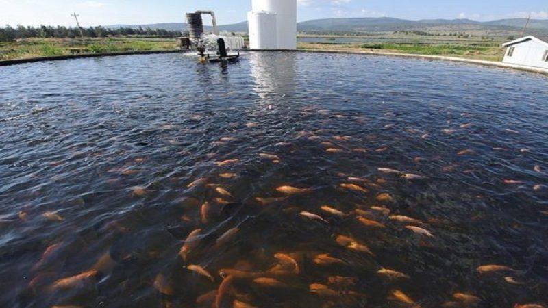 Producción acuícola un modelo económico para pescadores de Atlántico, Bolívar y Magdalena