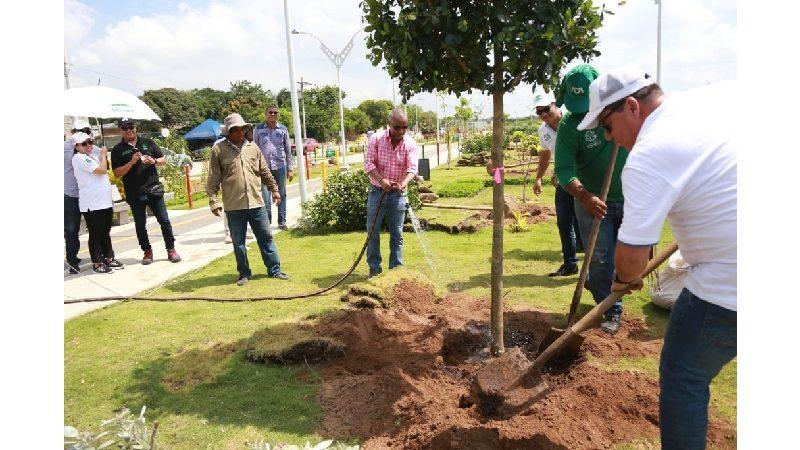 Siembra Barranquilla llega a los parques de la ciudad con 4.000 arboles