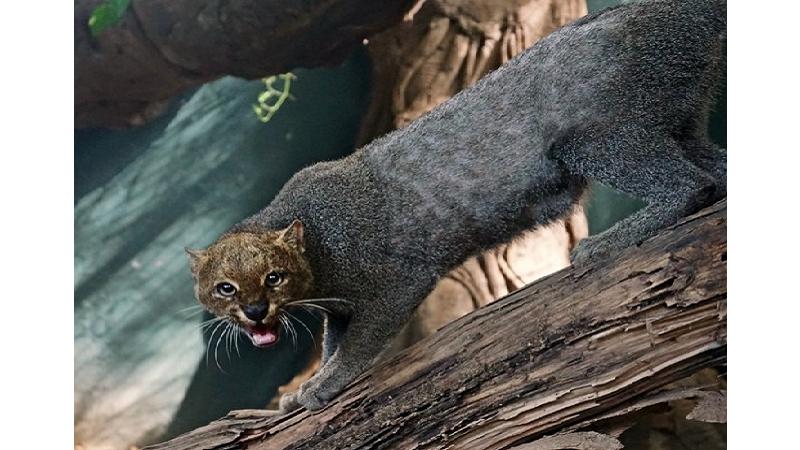 Zoológico de Barranquilla atenderá a más de 20 mil visitantes este fin de año 2018