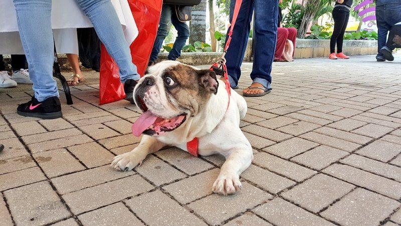 Vacunadas 1.700 mascotas en campaña especial de protección animal