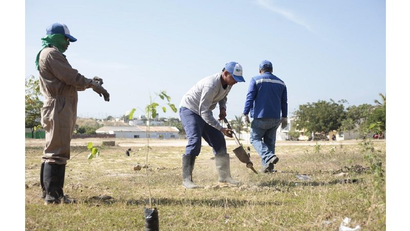 Edumas sembró 2 mil árboles para contrarrestar Fenómeno del Niño