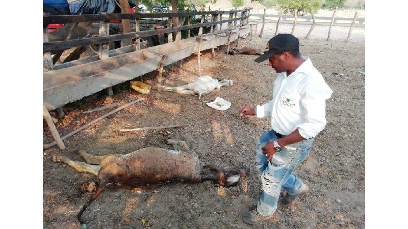 Alerta en La Peña y Aguada de Pablo, han muerto más de 40 vacas y perros en extrañas circunstancias