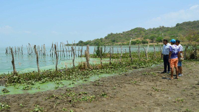 Gobernación investiga muerte de 25 terneros en Villa Juana, Manatí