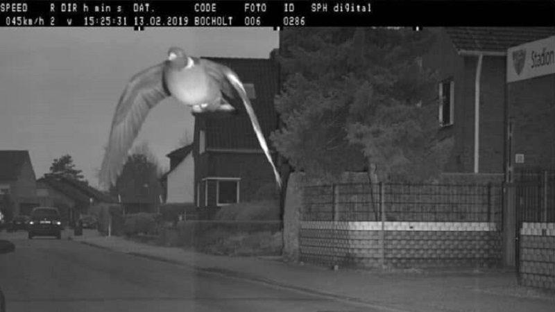 Cámara de fotomulta captó a una paloma que iba con exceso de velocidad