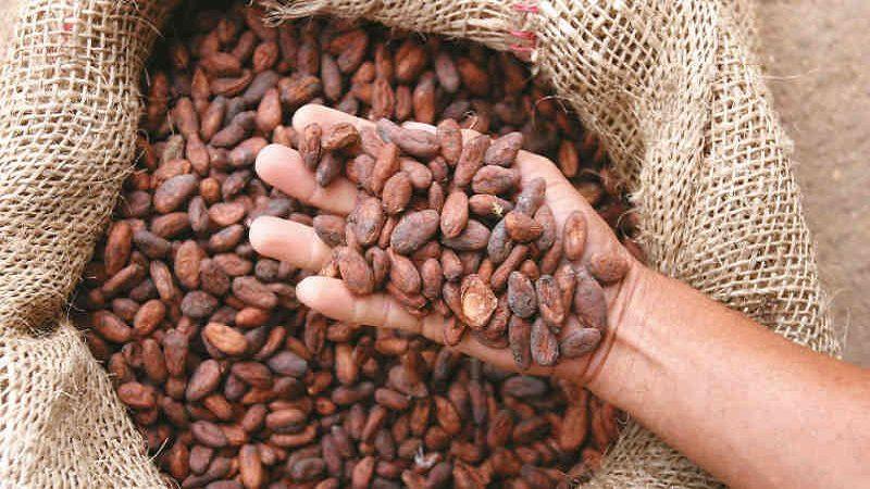Colombia y Canadá firman convenio para apoyar a productores de cacao