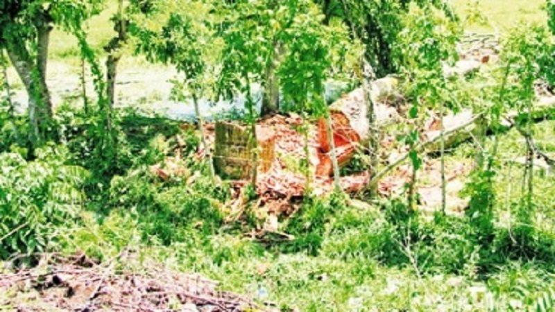 Denuncian tala de más de 200 árboles en Betulia, Sucre