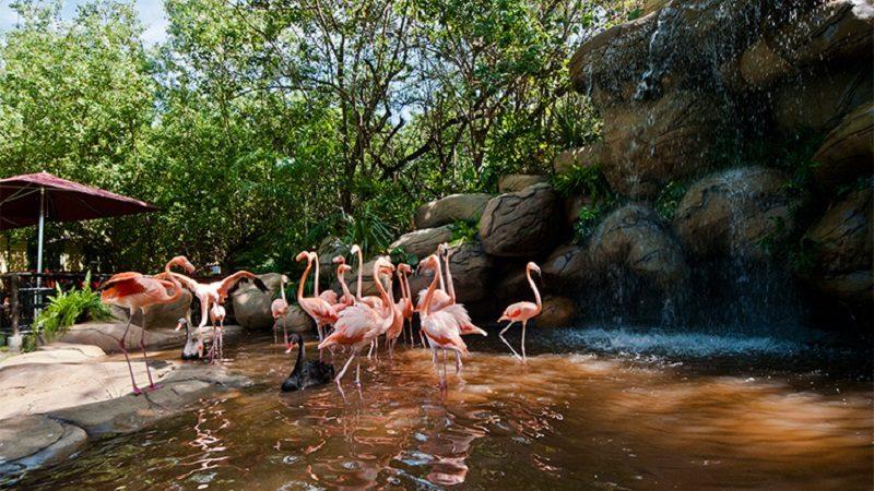 Cartagena estrena eco-parque con más de 700 animales