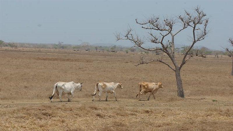 Sequía en la región Caribe se extenderá hasta marzo: Ideam